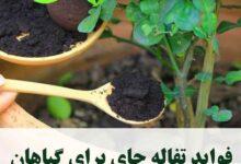 4042 220x150 - فواید تفاله چای بر گیاهان - گیاهان