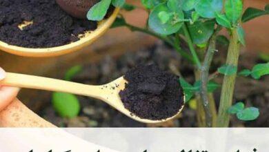 4042 390x220 - فواید تفاله چای بر گیاهان - گیاهان
